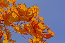 Free Autumn Leaves Royalty Free Stock Photos - 3289928