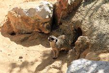 Free Sand Dog Royalty Free Stock Photo - 32801235