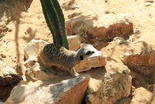 Free Sand Dog Stock Images - 32801374