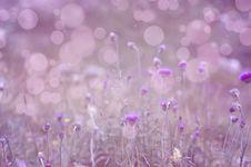 Free Pink Background Stock Photo - 32805050