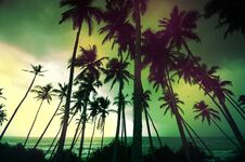 Free Untouched Tropical Beach In Sri Lanka Royalty Free Stock Image - 32806456