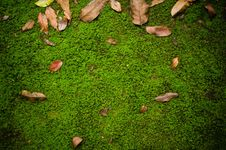 Free Ground Path With Moss Royalty Free Stock Photo - 32806905
