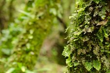 Free Green Ferns And Moss Royalty Free Stock Image - 32806956