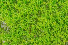 Free Sphagnum Moss Stock Images - 32807184