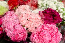 Free Colorful Flowers Royalty Free Stock Photo - 32807825