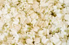 Crown Flower Background Stock Photography