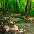 Free Stones And Tree Roots In Clear Forest Brook Royalty Free Stock Image - 32821296