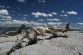 Free Jeffrey Pine, Sentinel Dome, Yosemite Royalty Free Stock Photo - 32824845