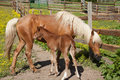 Free Horse With Foal Stock Photo - 32829970