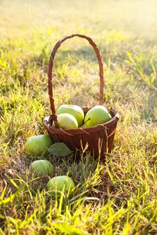Free Basket Of Apples Royalty Free Stock Image - 32829856