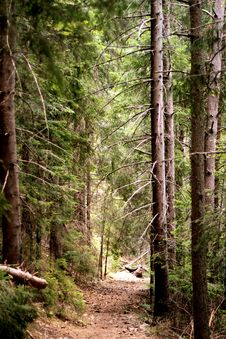 Free Pathway In The Forest Royalty Free Stock Photos - 32831998