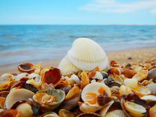 Free Seascape With Shells Stock Photo - 32834750