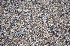 Free Sea Shells Royalty Free Stock Photos - 32836018