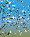 Free Branches With White Magnolias Stock Images - 32864034