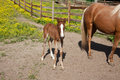 Free Horse With Foal Royalty Free Stock Photography - 32869897
