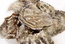 Free Oysters Stock Photography - 32865072