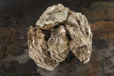 Free Oysters Royalty Free Stock Photo - 32865115