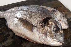 Free Sea Bream Royalty Free Stock Photography - 32865197