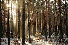 Free Winter In The Forest. Stock Images - 32866914