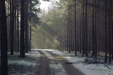 Free Winter In The Forest. Stock Photos - 32866993