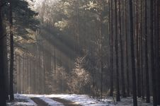 Winter In The Forest. Royalty Free Stock Photo
