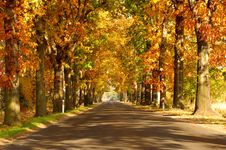 Free Road In The Autumn. Royalty Free Stock Images - 32868299