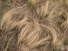 Free Dry Grass Stock Photography - 32869012