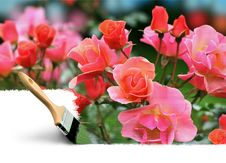 Paintbrush Painting Summer Colors Royalty Free Stock Images