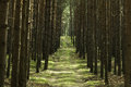 Free Path In Forest Stock Photography - 32873912