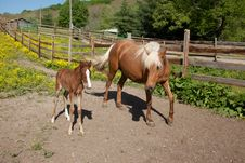 Free Horse With Foal Stock Images - 32870244