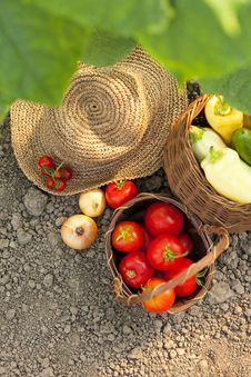 Free Harvest Vegetables Stock Photo - 32873860