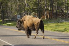 Free Wild Bison Obeying A Speed Sign. Royalty Free Stock Images - 32874729