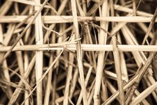 Close-up Branch Of Wheat Stock Image