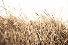 Mown Wheat Close-up During Royalty Free Stock Photo