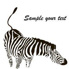 Free Zebra Vector Stock Photography - 32884662