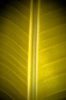 Free Banana Leaf Closed-up In Golden Color Stock Photography - 32889252