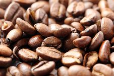 Free Coffee Bean Royalty Free Stock Photo - 32891365