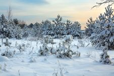 Free Winter Landscape Royalty Free Stock Image - 32899056