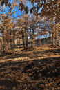 Free Burned Out Trees And Leaves Stock Photography - 3290352