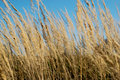 Free Field - Grass Stock Images - 3298894