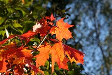 Free Autumn Leaves Stock Images - 3290234