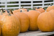 Free Pumpkins For Sale Royalty Free Stock Photos - 3290348