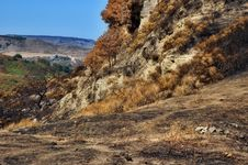 Free Landscape After Fire Royalty Free Stock Photography - 3290357