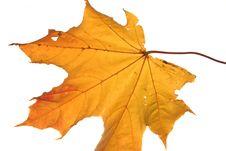 Free Autumn Leaf Royalty Free Stock Photo - 3290905