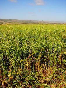 Free Aldinga Grassy Field 2 Royalty Free Stock Photo - 3292215