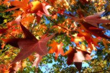 Free Colorful Autumn Leaves Stock Photography - 3292492