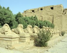 Free Avenue Of Ram-headed Sphinxes Royalty Free Stock Image - 3292556