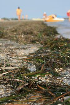 Seaweeds Royalty Free Stock Image