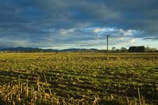 Free Harvested Cornfield In Colour Stock Images - 3293074