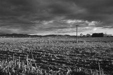 Free Harvested Cornfield Stock Photo - 3293120